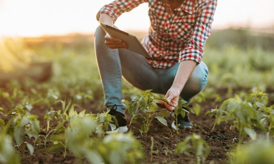 Young Woman Starts YouTube Channel on Her First-time Farming Venture, and it Goes Viral