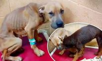 2 Abused Dogs Form Unbreakable Bond at Shelter–So They Find a Human Family to Adopt Both Together