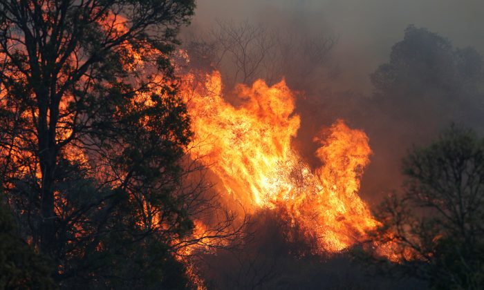 A bushfire rages near the rural town of Canungra in the Scenic Rim region of South East Queensland, Australia, on Sept. 6, 2019. (Regi Varghese/AAP/via REUTERS)