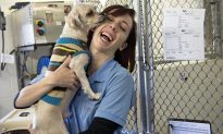 Animal Welfare Advocates Commend Michigan on Becoming a No-Kill State