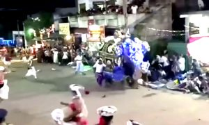 At Least 18 Injured After Elephants Stampede During Religious Festival
