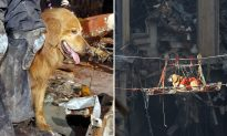The Rescue Dogs of 9/11 Deserve a Moment and Shall Not Be Forgotten