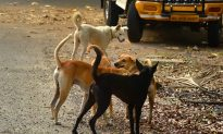 Indian Man Saves His Money For 10 Years to Buy a 'Pet Ambulance' to Rescue Desperate Stray Dogs
