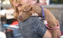 Sick Shelter Dog Was About to Be Euthanized–Now He Just Wants to Thank His New Human Mom
