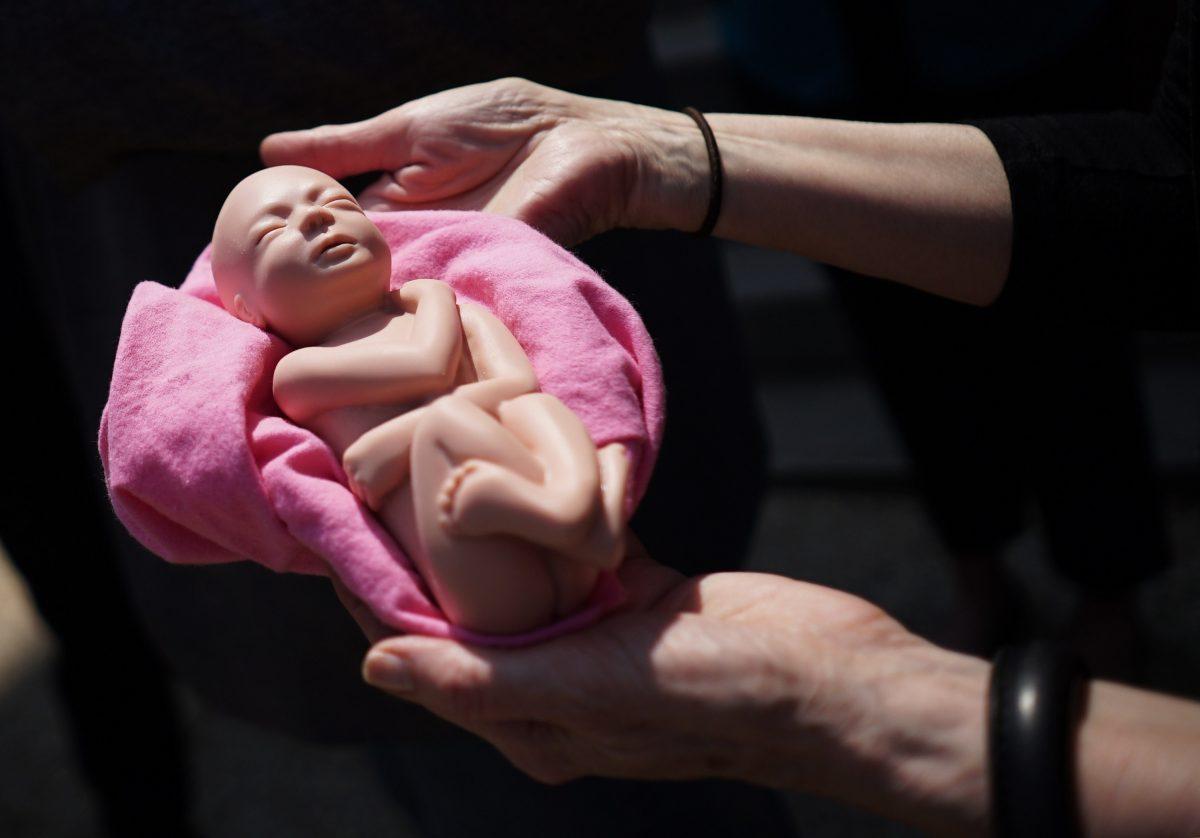 model-of-fetus
