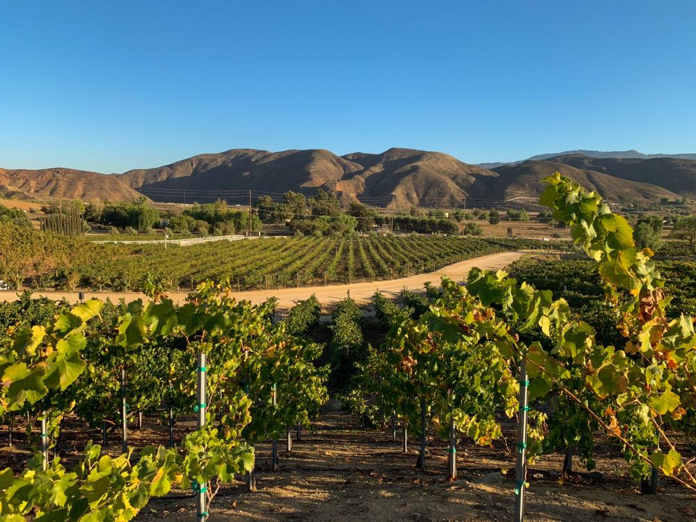 Vineyards at the wine region in Temecula