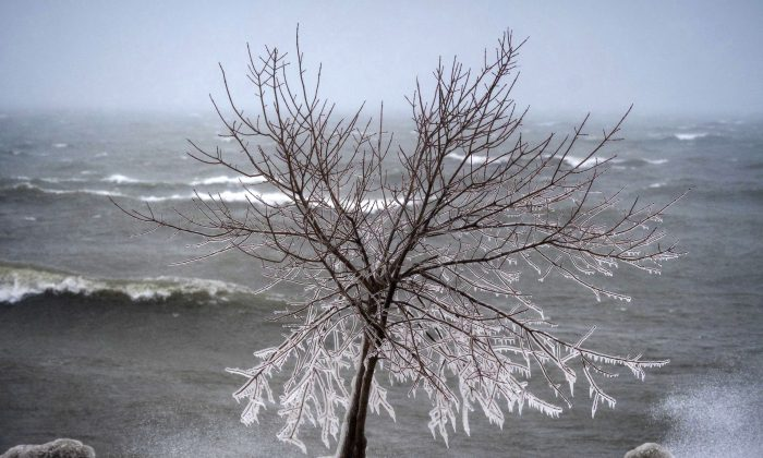Icicles form along the tree branches as the rough waves crash into shore at Coronation Park in Toronto on Feb. 12, 2019. Canadians can expect average temperatures this fall that will give way to a cold winter in central and eastern parts of the country, according to The Weather Network. (THE CANADIAN PRESS/ Tijana Martin)