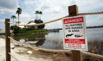 Blogger's Plea for Couple Whose Boy Was Killed by Gators at Disney Is Thought Provoking
