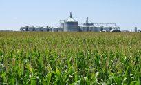 Big US Farms Get Even Bigger Amid China Trade War
