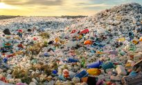 Teen Scientists Discover Bacteria That Can Turn Plastic Waste Into Valuable Chemicals