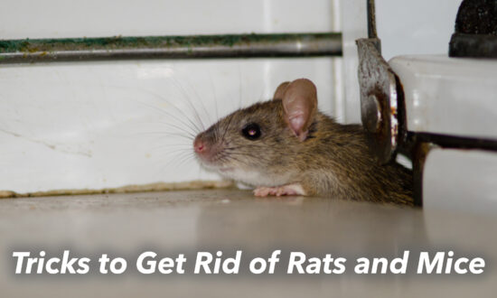 10 Cruelty-free Hacks to Drive Out Mice and Rats From Your Home