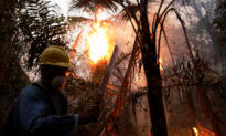 Firefighters in Bolivia Lose Hope of Taming Blazes as Burned Area Doubles