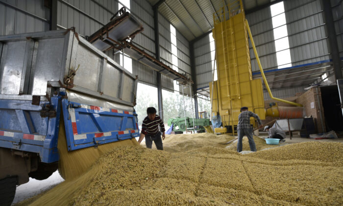 Workers are seen next to a truck unloading harvested soybeans at a farm in Chiping County, Shandong Province, China on Oct. 8, 2018. (Reuters)