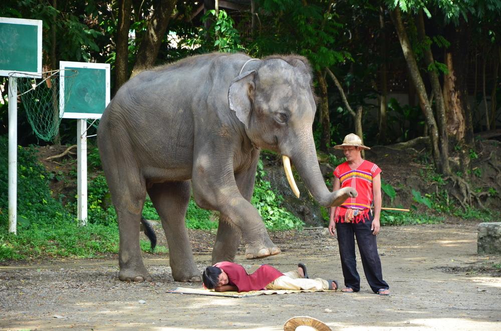 ELEPHANT MASSAGE craze is sweeping Thailand
