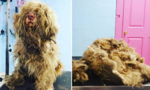 Lady Opens Salon at Midnight to Give Severely Matted Stray Dog an Emergency Grooming
