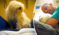 Terrified Dog Knows It's About to Be Euthanized, Until Rescuer Intervenes and Starts Recording