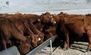 Australia's Scott Morrison Says Up to States to Intervene for Drought Animal Welfare