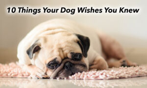 10 Things Your Dog Really Wants You to Know