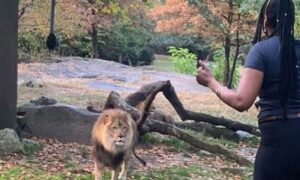 Friends of Woman Who Entered Lion's Enclosure Fear for Her Mental Wellbeing