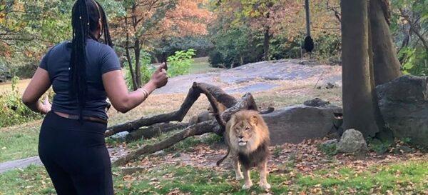 Woman Bronx Zoo Lion