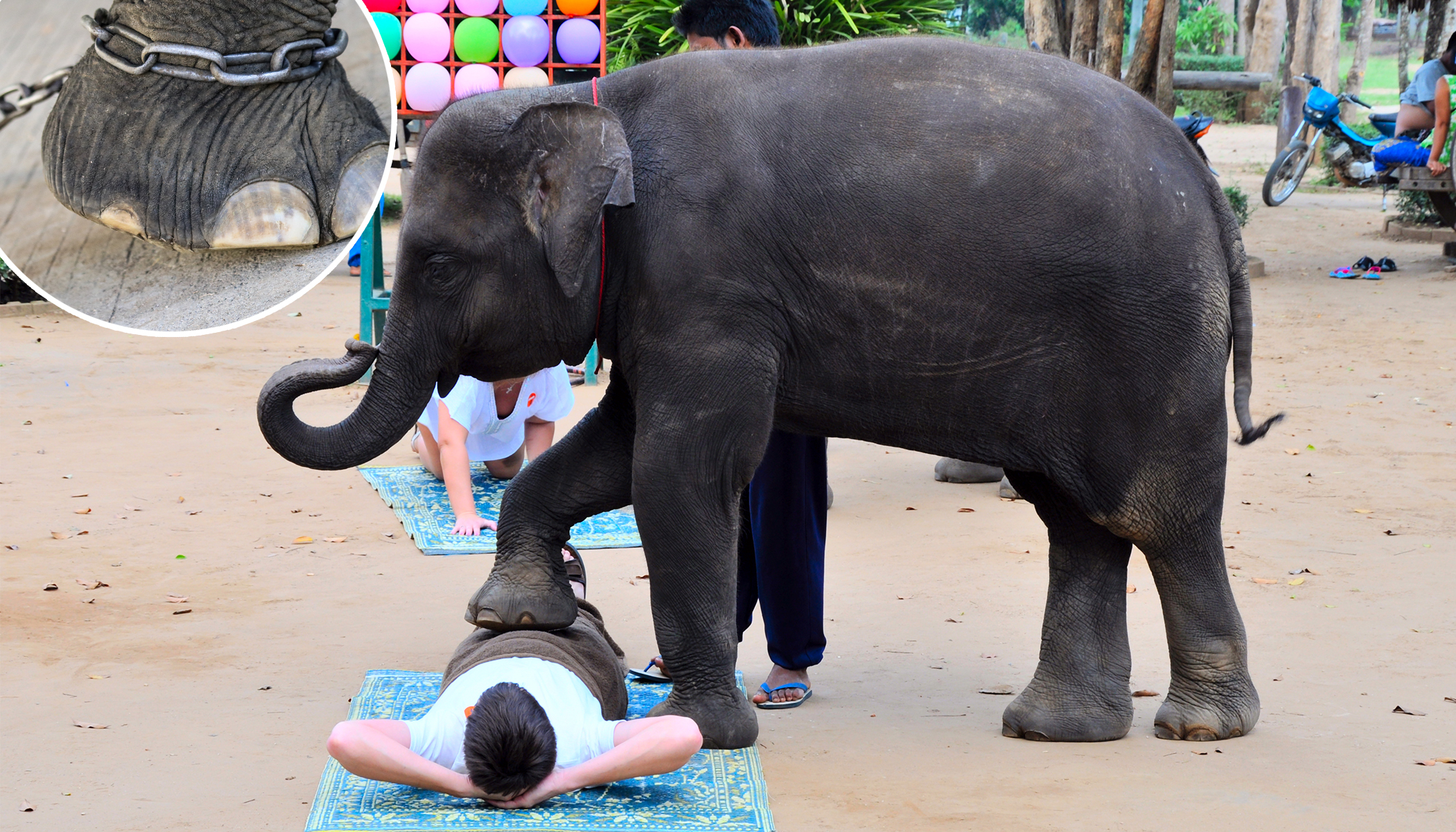 The Reason Tourists Should Boycott Elephant Massages in Thailand Is Truly Heartbreaking