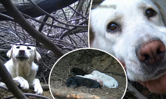 Female Dog Was Homeless and Living in Dense Brush–Then Rescuers Arrived and Found Her Secret