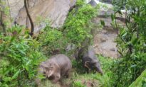 5 More Dead Elephants Found at Waterfall, Officials Say