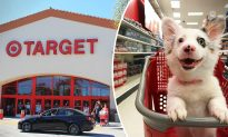 4-month-old Corgi Is Super Excited to Visit Target for the First Time, and Her Reactions Are Priceless