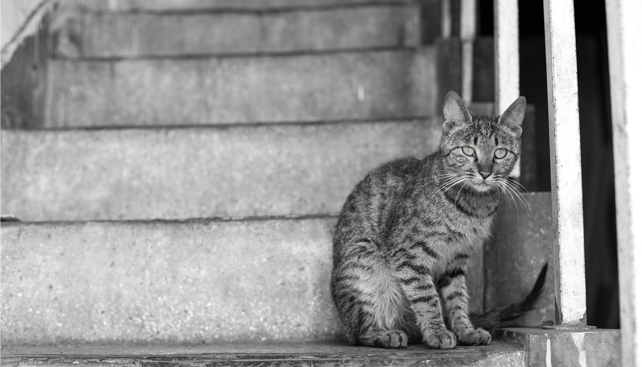 Is This Cat Going Upstairs or Downstairs? This Optical Illusion Has Stumped the Internet