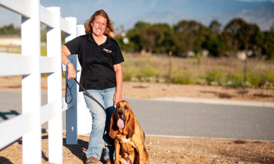 A Woman and Her Bloodhounds Are on the Trail