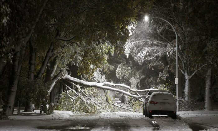 An early winter storm with heavy wet snow caused fallen trees, many on cars, and power lines in Winnipeg early Friday morning, October 11, 2019. (John Woods/The Canadian Press)