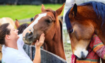 'Horse Therapy' Retreat Offers Human Visitors a Unique, Transformational Experience