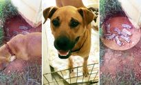 Mom Dog Desperately Hides 9 Puppies in Ditch From Cruel Owner Until Help Arrives