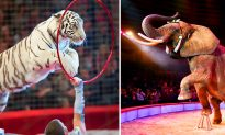 Traveling Circus Animals and Wild Animal Exploitation Soon to Banned in UK in 2020