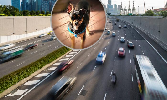 (Illustration - Shutterstock, Inset: Photo courtesy of Officer Joseph Puglia)