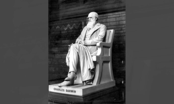 A marble statue of naturalist Charles Darwin at the Natural History Museum in London, England. (Rischgitz/Getty Images)
