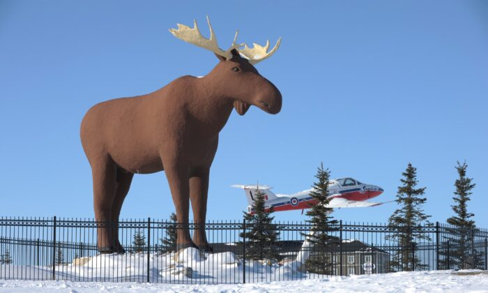 Mac the Moose, pictured in Moose Jaw, Sask., on Feb. 25, 2019. (THE CANADIAN PRESS/Mark Taylor)
