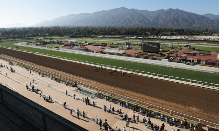 Race horses head for the finish line at Santa Anita Park in Arcadia, Calif., on June 23, 2019. (Mario Tama/Getty Images)