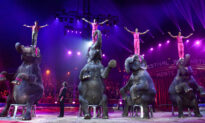 Denmark Buys Nation's Last 4 Circus Elephants to Help Them Retire Early