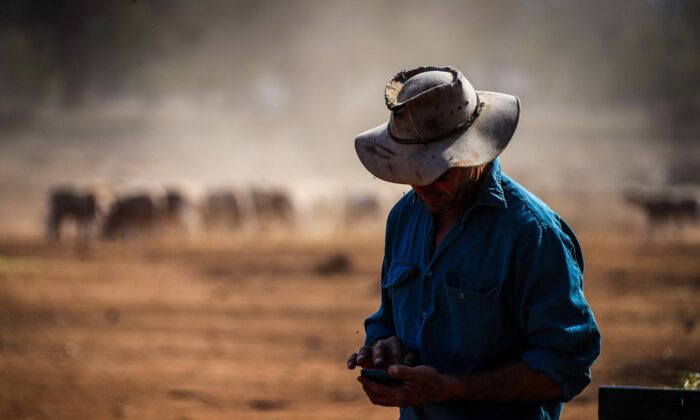 An Australian farmer checks his phone for weather updates after feeding his sheep in a drought-affected paddock on his property in north-western New South Wales, Australia, on Oct. 3, 2019. (David Gray/Stringer/Getty Images)
