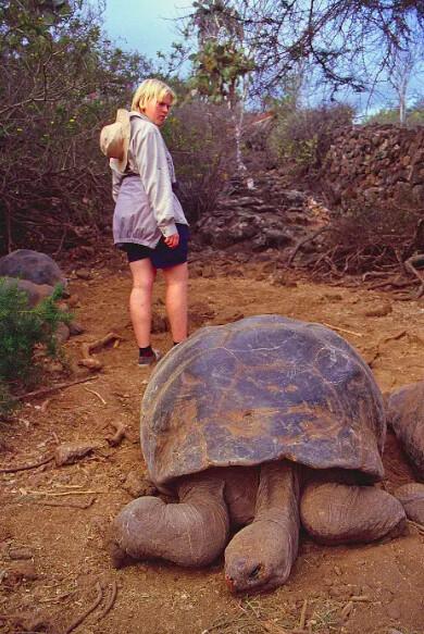 tortoise on galapagos