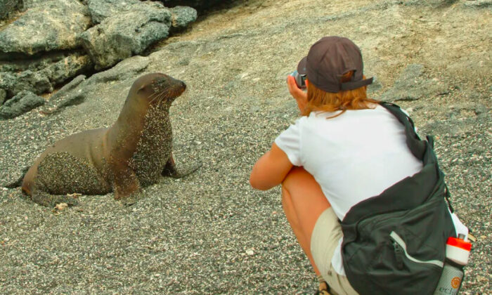 It's easy for tourists to take good close-up photos of most Galapagos wildlife, but it's prohibited to use flash, or touch, or otherwise bother wildlife, and you must stay within trails and other permitted spaces. Wardens are usually nearby and enforce all rules. (Fred J. Eckert)