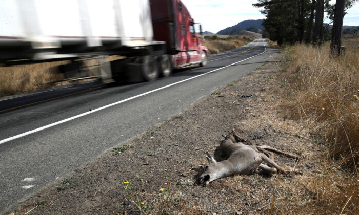 A dead deer lays on the side of the road in Nicasio, Calif., on Oct. 16, 2019. (Justin Sullivan/Getty Images)