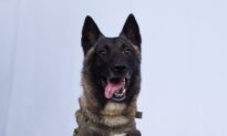 Trump Identifies 'Conan,' Military Dog in ISIS Raid, Says He Will Visit White House