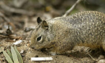 Squirrel Tests Positive for Bubonic Plague in Colorado: Officials