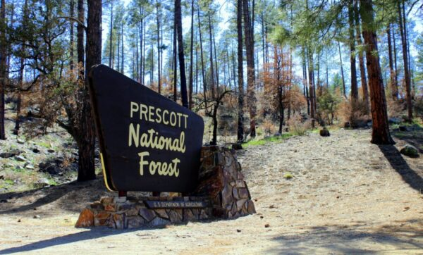prescott-national-forest-1200x724