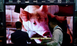 China's Pork Imports to Peak in 2022, Driven by Fatal African Swine Fever: Report