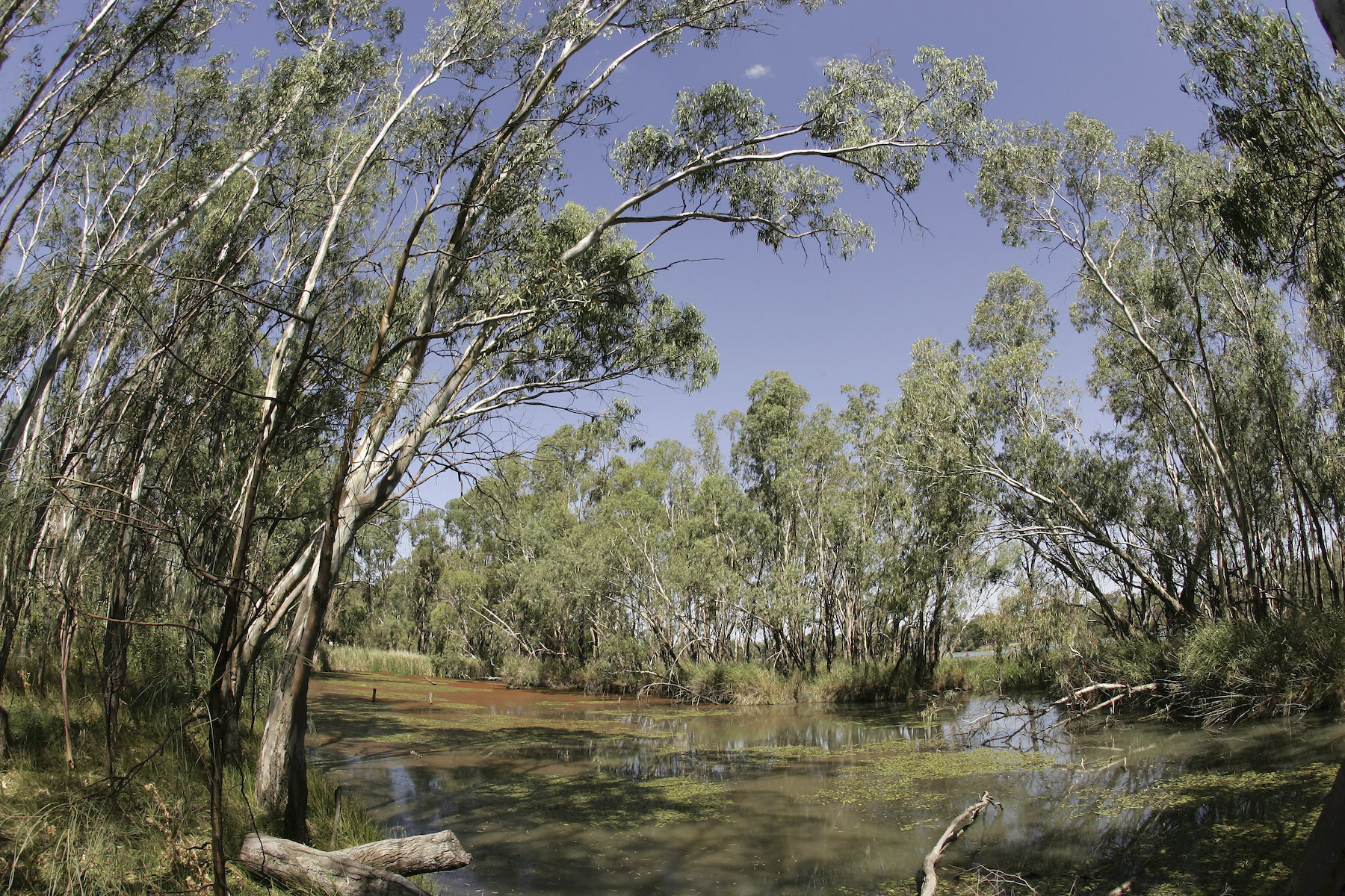 Murray Darling Basin In Crisis