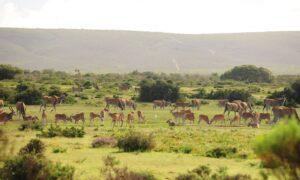 Wildlife Encounters at De Hoop Nature Reserve