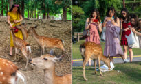 Japanese Deer Found in National Park With 7 lbs of Plastic in Stomach Left by Tourists